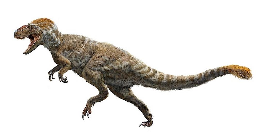 Trzeba przyzwyczajać się do myśli o opierzonych dinozaurach (fot. PNSO)