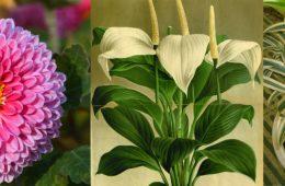 Jakie rośliny ochronią nas przed smogiem i innymi zanieczyszczeniami?