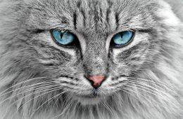 Koty mogą być lepsze od psów w wyszukiwaniu bomb. O ile im się zechce