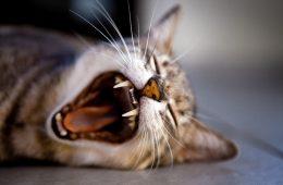 9 rzeczy, których prawdopodobnie nie wiecie o kotach