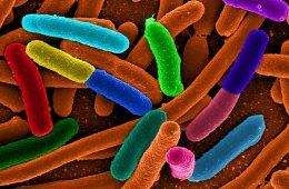 Bolesny dowód na ewolucję – gdy nasze miłe bakterie pokazują pazury