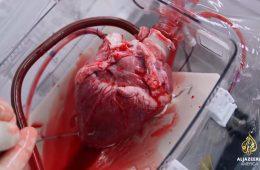 Dlaczego serce bije nawet po wyjęciu go z ciała?