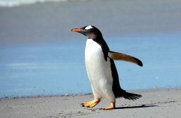 Guano pingwinów zdradziło… historię wybuchów wulkanu