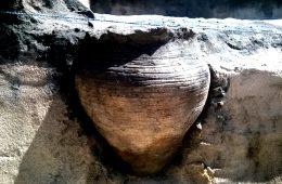 Pod Kazimierzem Dolnym odkopano garnek z 1000-letnią zupą!
