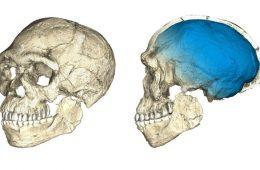 Gatunek Homo sapiens starszy nawet o 100 tysięcy lat!