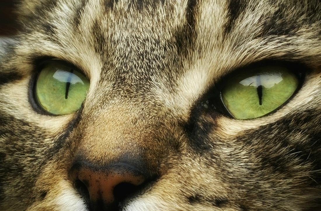 koty w śnie