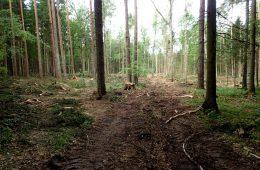 33 dziekanów i większość naukowców przeciwnych wycince Puszczy Białowieskiej