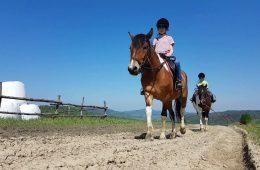 Jak żubry i konie huculskie wróciły w Bieszczady