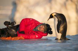 Marsz pingwinów 2 – że też można je pokazać w TAKI sposób!