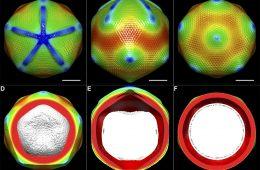 Nobel 2017 z chemii za niezwykłe obrazy tworzone przez mikroskopię krioelektronową