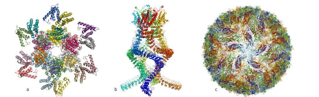 Obrazy uzyskane dzięki mikroskopii krioelektronowej. a. Kompleks białek odpowiadających za cykl dobowy b. Receptor odbierający zmiany ciśnienia w uchu wewnętrznym. c. Wirus Zika. Rys. nobelprize.org