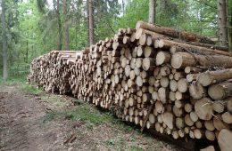 Dlaczego nie należy wycinać Puszczy Białowieskiej – 30 pytań i odpowiedzi od naukowców