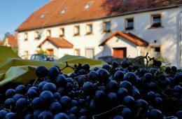 Winnica na zboczu wulkanu – jedyna taka w Polsce!