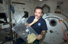 Czy astronauta palił trawę na orbicie, czyli jak rozpracować fake newsa