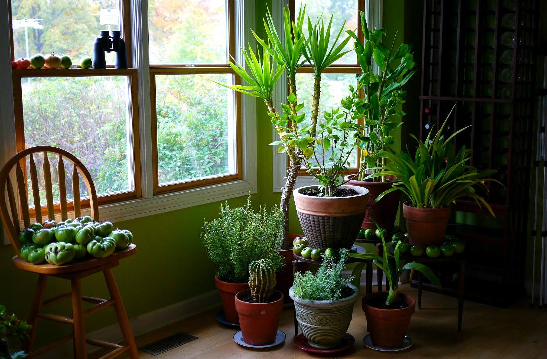 Czy Bezpieczne Jest Trzymanie Roślin W Sypialni Skoro Nocą