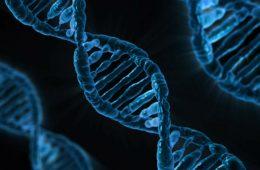 Badanie genu MTHFR – sprawdzamy czy ma sens z punktu widzenia medycyny