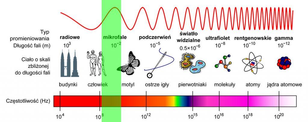 Spektrum fal elektromagnetycznych - na zielono zaznaczony przybliżony zakres fal wykorzystywanych przez telefonię komórkową. Rys. Adi4000/Dobrzejest [PD]