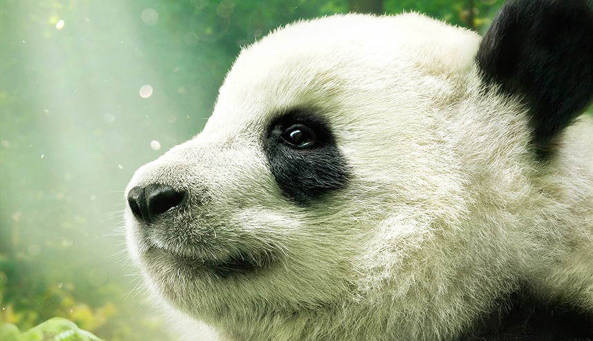 Znalezione obrazy dla zapytania pandy 3d dorociński