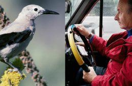 Co ma wspólnego taksówkarz z orzechówką czyli niezwykłe związki ptaków i ludzi