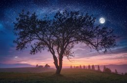 Drzewa zmieniają kształt w rytmie dobowym – budzą się i zasypiają