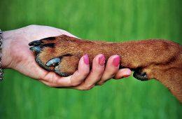 Psy wymyśliły język gestów, by się z nami porozumieć
