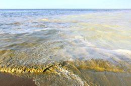 Sinice w Bałtyku – czym grożą i dlaczego nie można się kąpać?