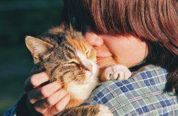 Czy koty nas lubią? Mamy naukową odpowiedź