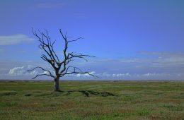Próg bezpieczeństwa dla klimatu to 1,5˚C – osiągniemy go do 2052 roku