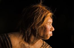 Matka neandertalka, ojciec denisowianin - odkryto hybrydę tych dwóch gatunków człowieka
