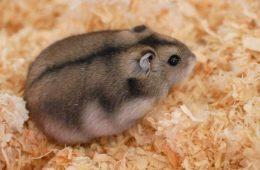 Czy w świecie zwierząt zdarzają się porody rodzinne?