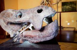 Zbieramy na rekonstrukcje czaszki gigantycznego gada z Lisowic