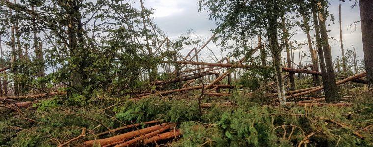 Zniszczony las w pobliżu Suszka - sierpień 2017. Fot. Crazy Nauka