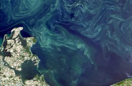 Sinice w Bałtyku - czym grożą i dlaczego nie można się kąpać?
