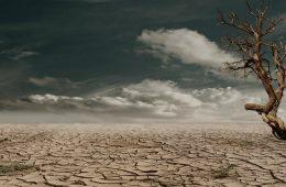 Wymrze milion gatunków – my, ludzie, to sprawiliśmy