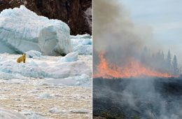Płynie Grenlandia, płonie Arktyka - zmiana klimatu w natarciu