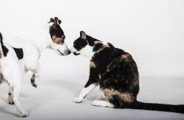 Mit: nowym koronawirusem można zarazić się od psów i kotów