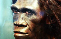 Najstarszy Homo erectus żył w tym samym miejscu i czasie co starsze ewolucyjnie homininy