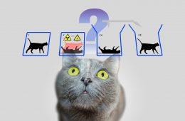 Kot Schrödingera – o co chodziło słynnemu fizykowi?