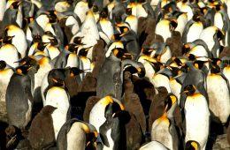 Naukowcy doznali odlotu od gazu rozweselającego z guana pingwinów
