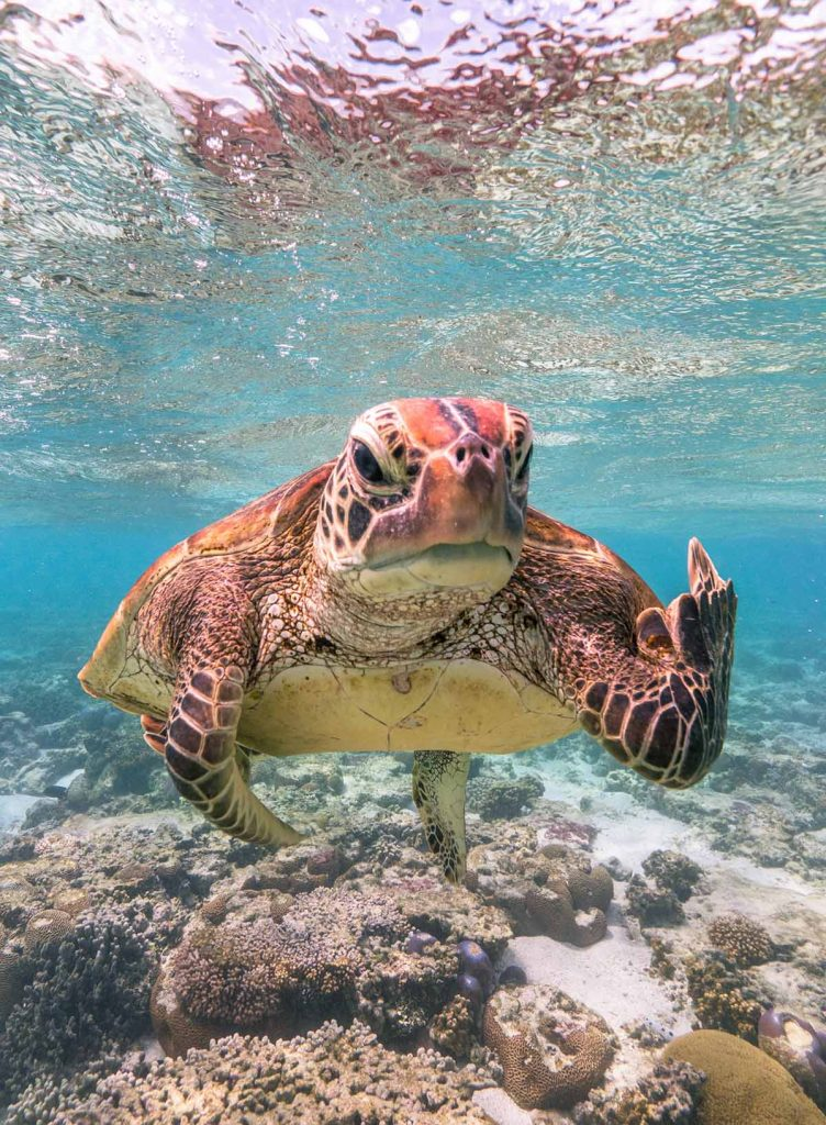 Fot. © Mark Fitzpatrick / Comedy Wildlife Photo Awards 2020
