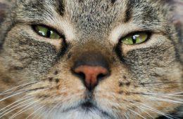 Koty żyją na terenach Polski już od 6000 lat!