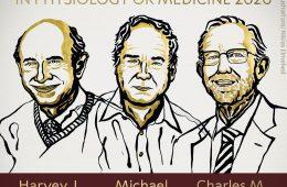 Nobel 2020 z medycyny za odkrycie wirusa zapalenia wątroby typu C