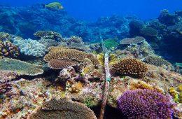 Idzie tsunami! Ostrzegą o tym podmorskie kable internetowe