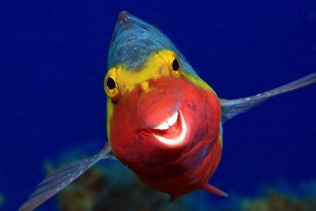 Uśmiechnięta sparysoma kreteńska. Fot. © Arthur Telle Thiemann / Comedy Wildlife Photo Awards 2020