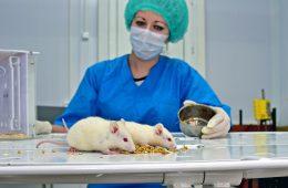 Doświadczenia na zwierzętach – jak to wygląda od strony eksperymentatora?