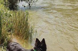 atena-river
