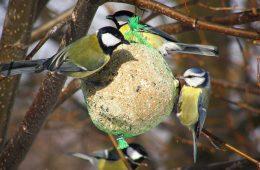 Jak dokarmiać zimą ptaki, żeby im nie zaszkodzić?