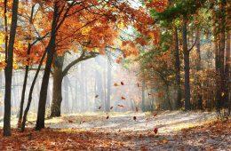 Jesień nadejdzie 22 września 2021 o 21.21